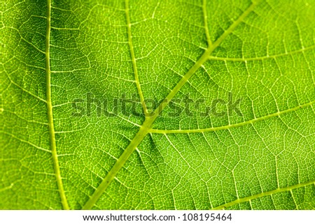 detail of leaf - stock photo
