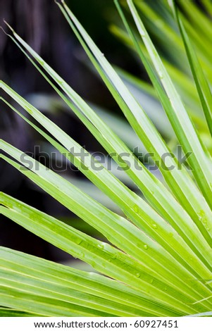 detail of leave, Everglades National Park, Florida, USA - stock photo