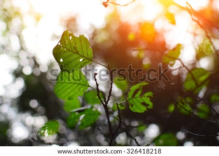 Detail of leaves with sunshine. Nice dark autumn background. - stock photo