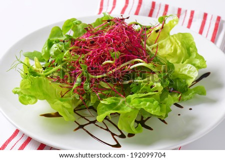 detail of mixed salad with red beetroot sprouts - stock photo