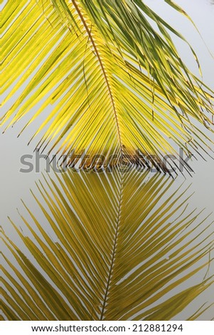 detail of palm leaves hanging in the water