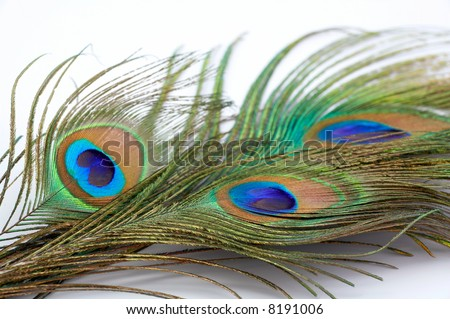 detail of peacock feather as background