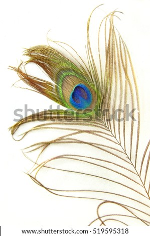 Detail of peacock feather isolated on white