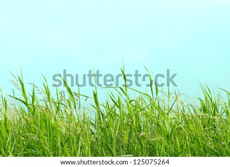 Detail of some flowering grass plants at the beach. - stock photo