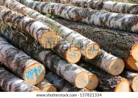 Detail of stacked and cut birch tree logs. - stock photo