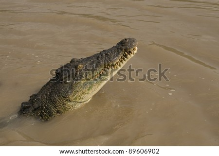 Detail of the head of a crocodile that is swimming in a river near Kakadu National Park in Australia