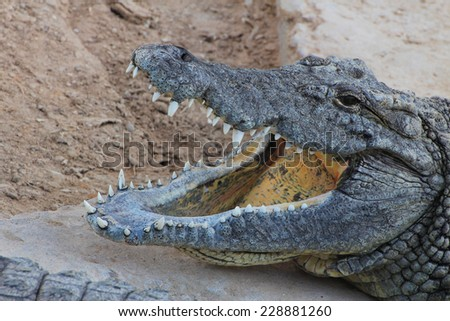 Detail of the head of a crocodile with its mouth open and teeth bared. Djerba