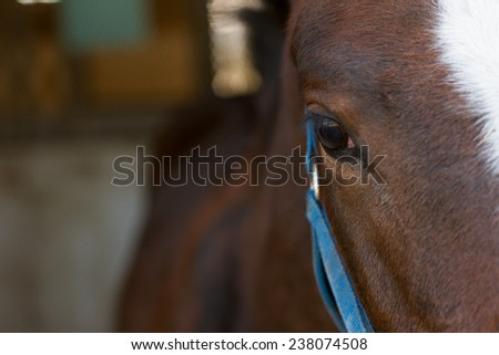 Detail of the horse eye - stock photo