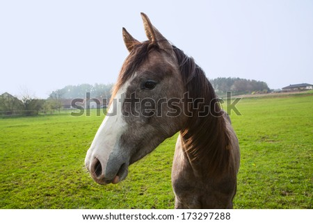 DETAIL OF THE HORSE HEAD  - stock photo