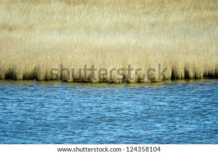 Detail of the Wadden Sea and some reed. - stock photo