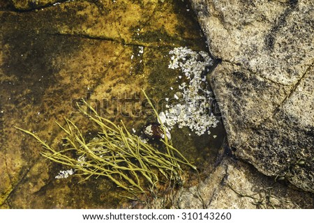 Detail of tide pool with seagrass and broken shells in Acadia National Park, Maine - stock photo