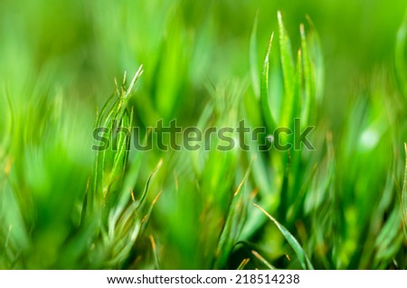 Detail of tiny moss plants growing in the forest. - stock photo