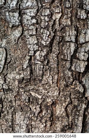 Detail of tree bark - stock photo