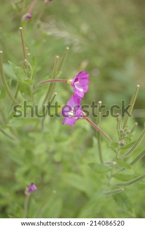 Detail of wild pink flowers on a out of focus green background