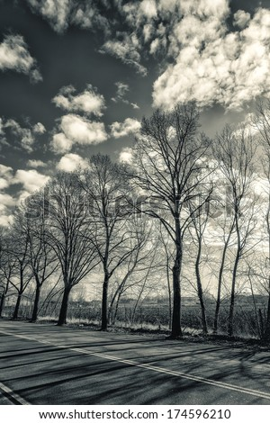 Detail of Winter Trees Along a City Road. Black and White - stock photo
