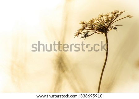 Detail of withered and dry plant as floral background with space for text