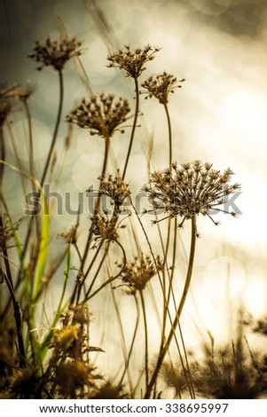 Detail of withered and dry wild plants on the blurred background