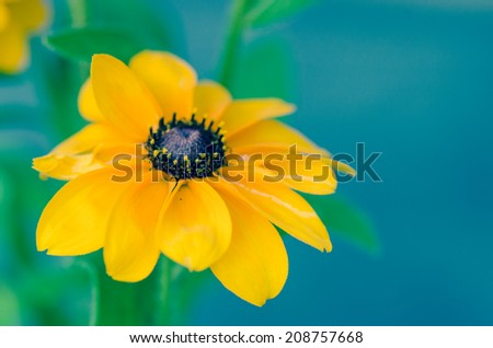 detail of yellow flower image