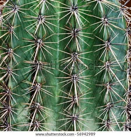 Detail of young saguaro cactus (Carnegia Gigantea) - stock photo