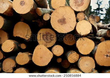 Detail pf a woodpile of chopped lumber in the forest - stock photo