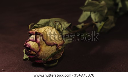 Detail photo of dead rose - stock photo