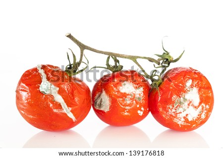 Detail some tomatoes in a state of decomposition - stock photo