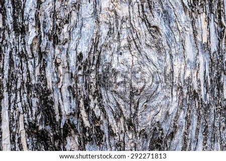 Detail Tree bark texture