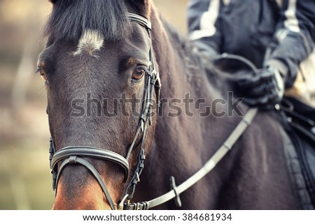 Detail view of horse and horseman on the back - stock photo