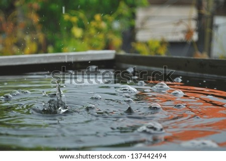 Detail view of raindrops on the water - stock photo