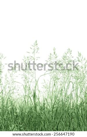 Detailed Abstract Meadow Grass Background, Vertical Isolated Macro Closeup, Large Summer Detail - stock photo