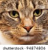 Detailed cat face full frame close up. - stock photo