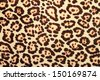 detailed pattern of real leopard fur - stock photo
