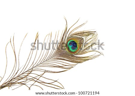 Detailed photo of a beautiful vivid peacock feather isolated on white - stock photo