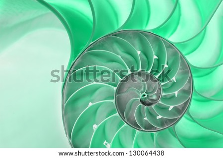 Detailed photo of a halved backlit  green shell of a chambered nautilus (Nautilus pompilius) - stock photo