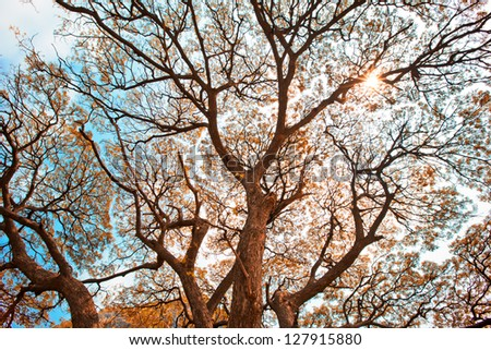 Detailed tree branches - stock photo