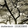 Detailed tree branches in Lake Manyara National Park - Tanzania, East Africa (stylized retro) - stock photo