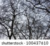 Detailed tree branches in Porto parks - Portugal - stock photo