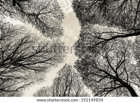 Detailed trees branches on sky - Russia (stylized retro) - stock photo