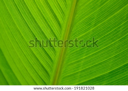 Details and veins in a tropical palm frond found in the Tropical Rain forest - stock photo