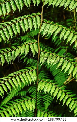 Details of a fern leaf resulting in an interesting pattern - stock photo