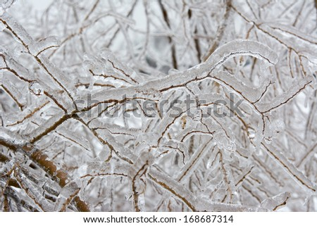 Details of an ice storm. After an ice storm many trees and leaves are frozen. Every detail is beautiful and simulates crystal. - stock photo