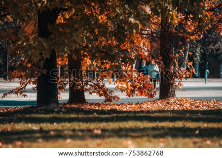 Details of autumn, orange leaves, trees