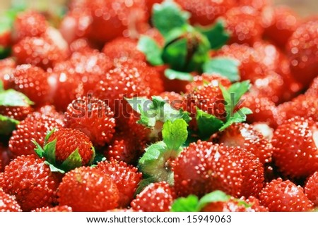 Details of red wild strawberry