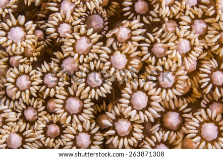 Details of soft coral flourishing under water like flowers - stock photo
