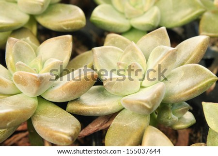 Details of succulent plants