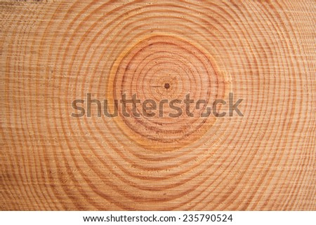 Details of the rings perpendicular to the trunk of a pine tree - stock photo