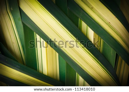 Details of woven leaves, palm family. - stock photo