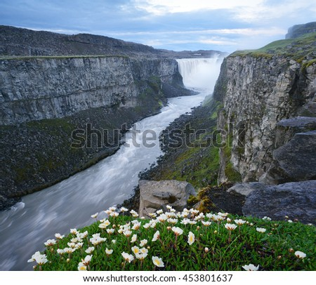 Dettifoss Waterfall, Iceland, Europe. Summer landscape with river and canyon. White flowers in the foreground. Cloudy morning. Beauty in nature
