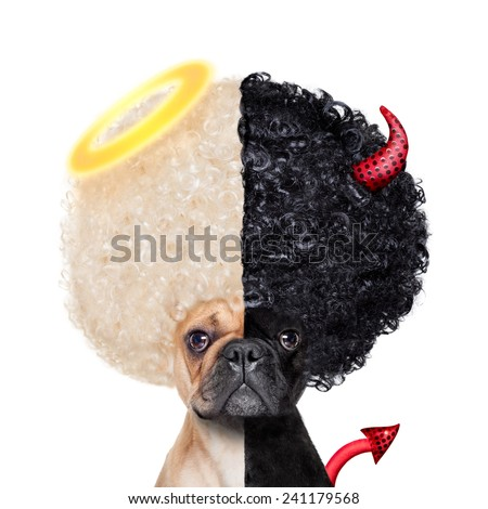 Devil and Angel fawn french bulldog dogs half face black and white ,deciding between right and wrong , good or bad, isolated on white background - stock photo