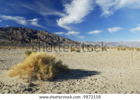 Devil's Corn Field in Death Valley - stock photo